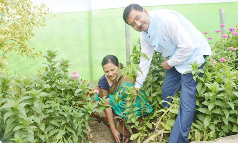 Planting of Sapling by Director